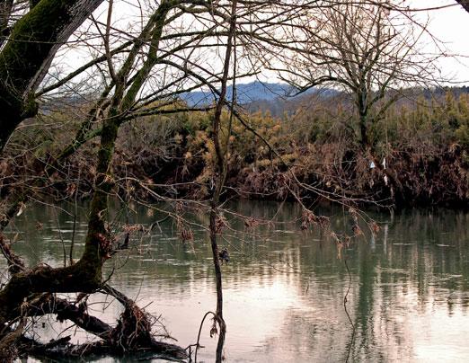 lpigeon_river2.jpg