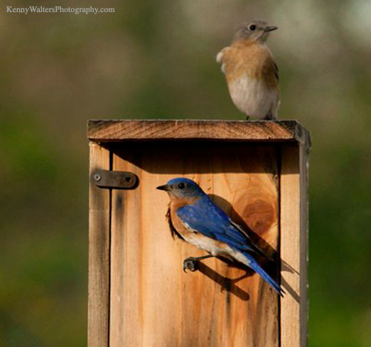 bluebird_house09b.jpg