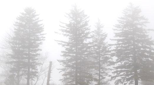 fir_fog1