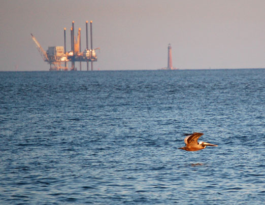 The Gulf Oil Spill of 2010 Will Have Devastating Environmental Impacts