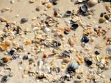 Bon Secour Beach 2