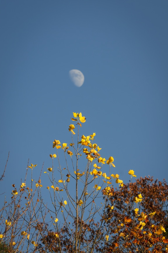 Fall Moon by Lake Cheaha