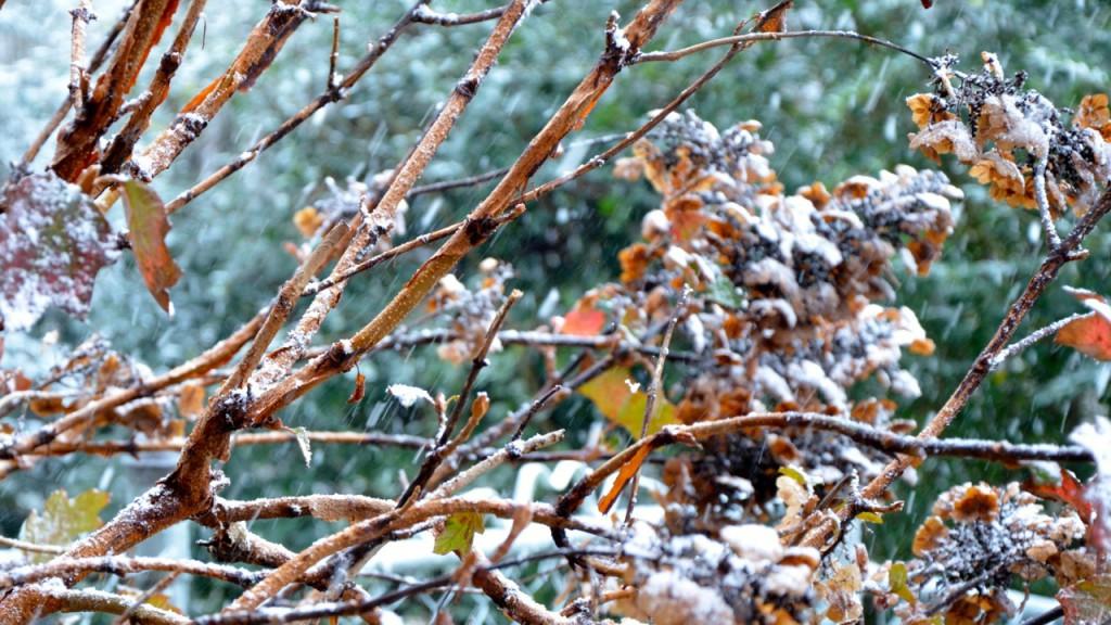 Snow1_2013a