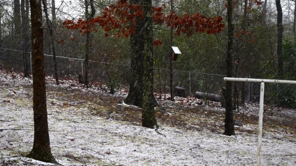 Snow1_2013c