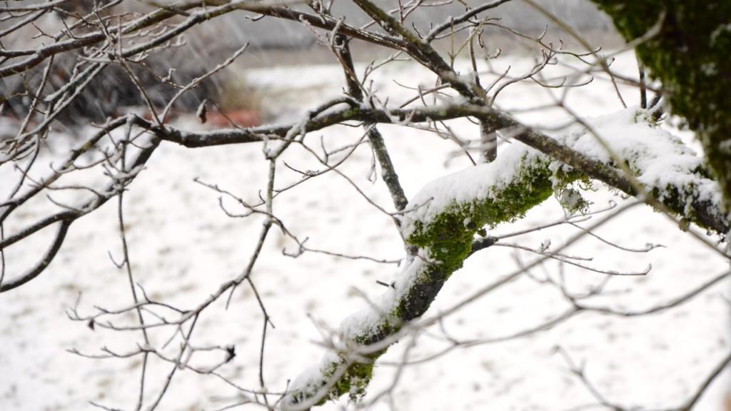 Snow1_2013f