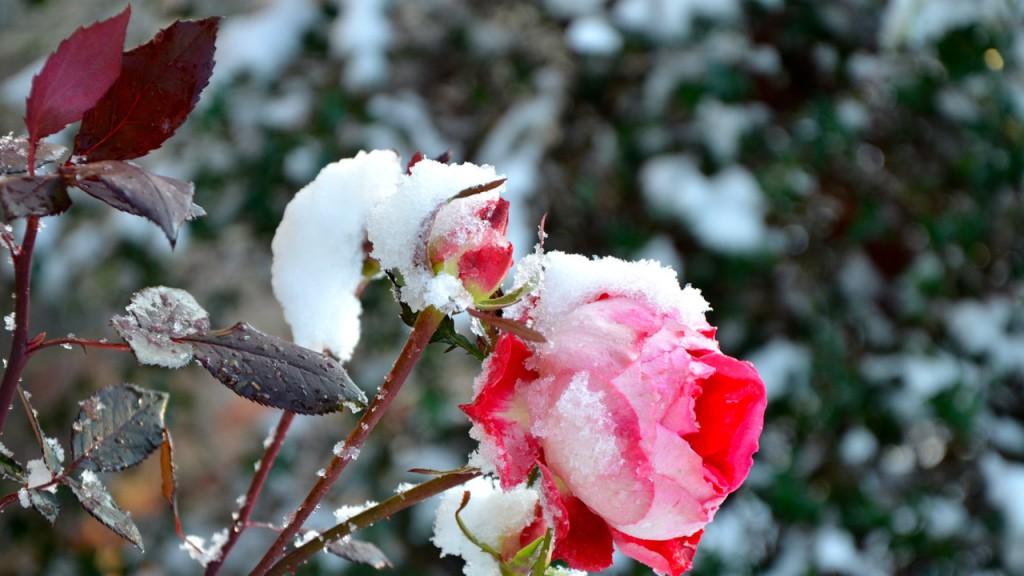 Snow1_2013l
