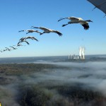 Endangered Whooping Cranes Zoom into Kentucky