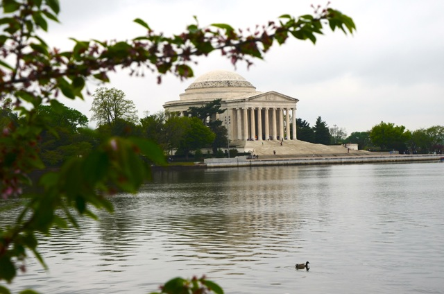 Cherry Blossoms Frame Jefferson Memorial