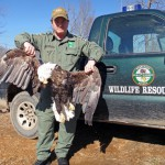 Reward of $8,500 Offered in Shooting Deaths of Bald Eagles in Tennessee