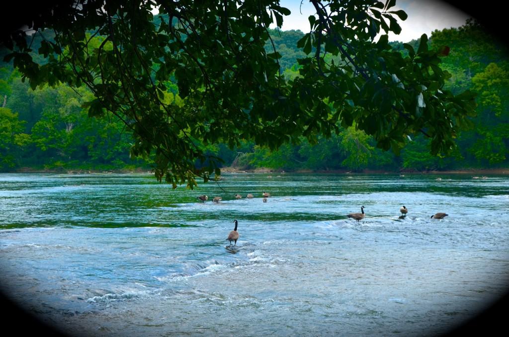 Chattahoochee_River7-28-13c