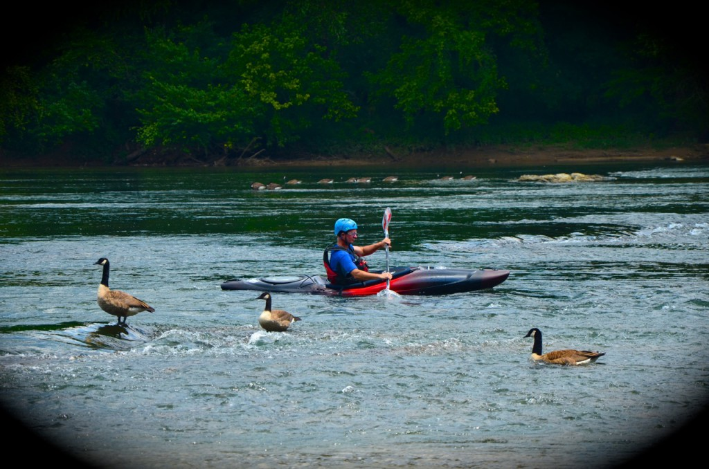Chattahoochee_River7-28-13e