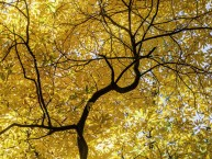 yellow_treeKW7