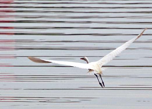 conclusion of the white heron The function of nature in sarah orne jewett's a white heron - nicole steurer - term paper - english language and literature studies - literature - publish your bachelor's or master's thesis, dissertation, term paper or essay.